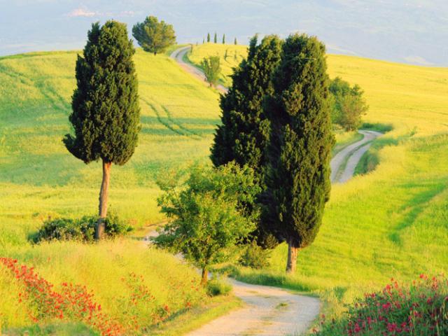 Дорога, холмы, деревья